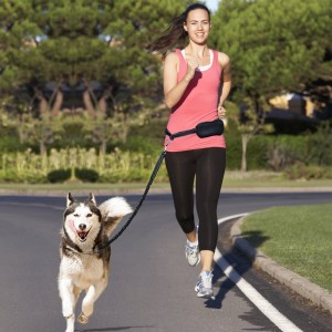 Hands Free Dog Harness For Running