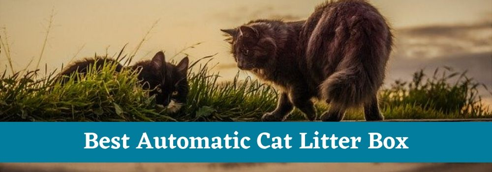 Best Automatic Cat Litter Box Text
