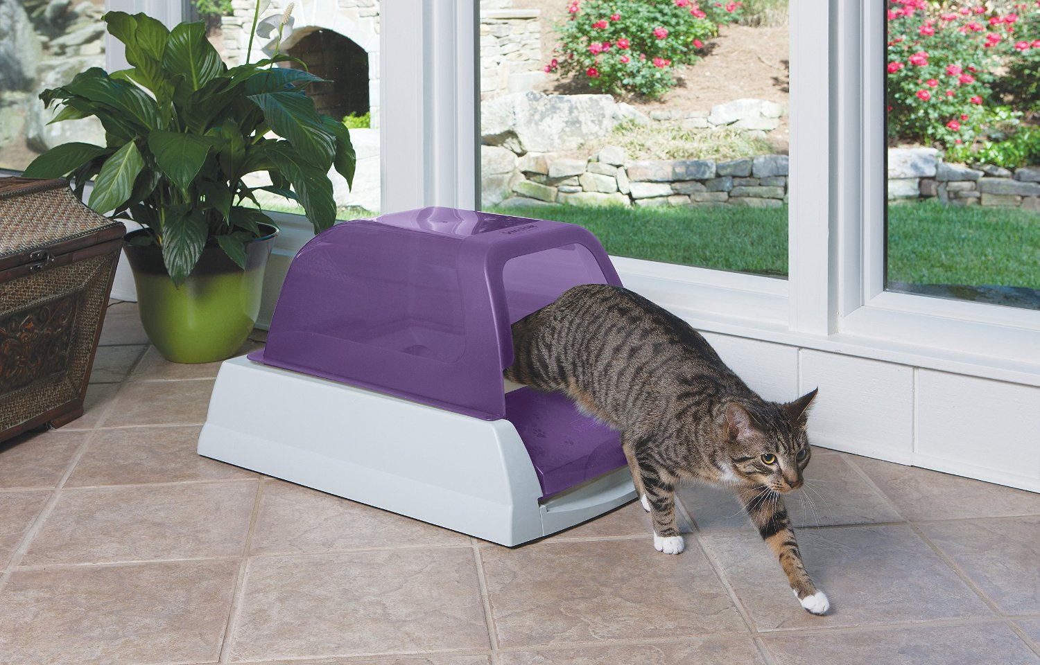 get rid of pet urine smell outside