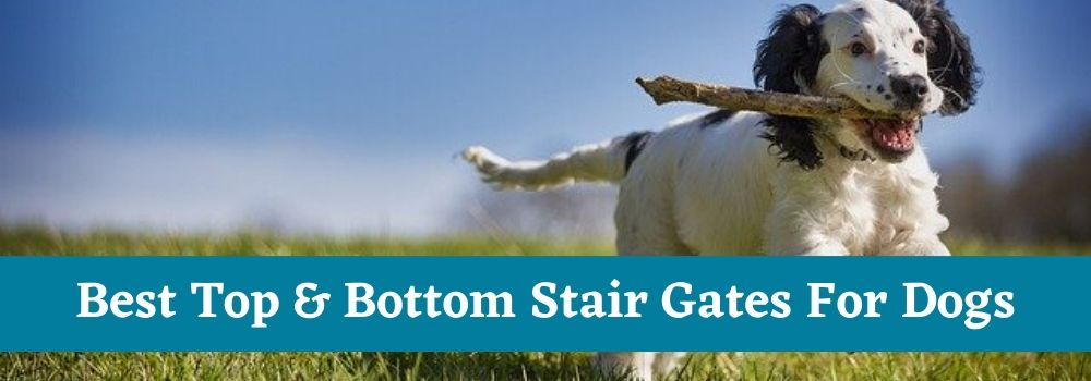 Best Top & Bottom Stair Gates For Dogs