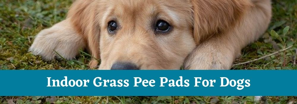 Indoor Grass Pee Pads For Dogs