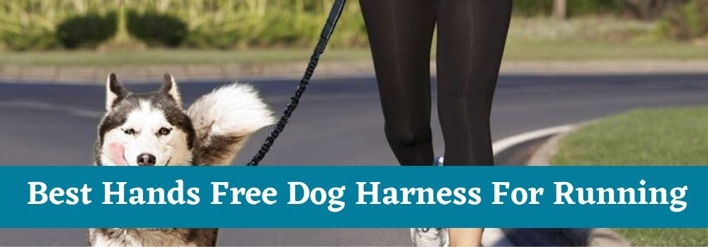 Best Hands Free Dog Harness For Running