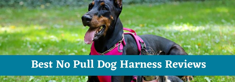 Best No Pull Dog Harness Reviews