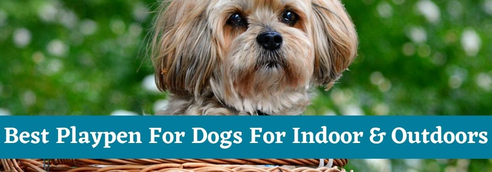 Best Playpen For Dogs For Indoor & Outdoors