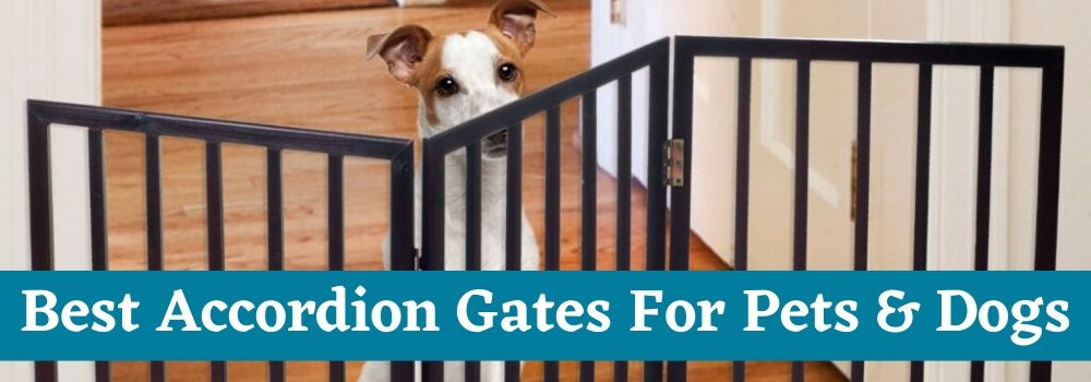 Best Accordion Gates For Pets & Dogs with Text