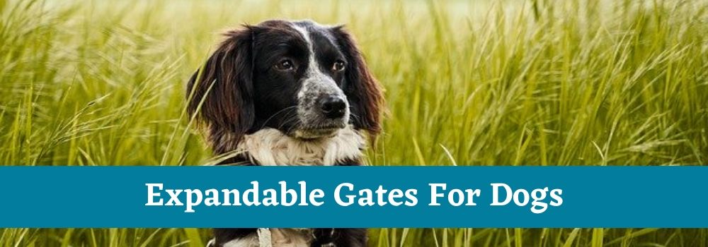 Expandable Gates For Dogs
