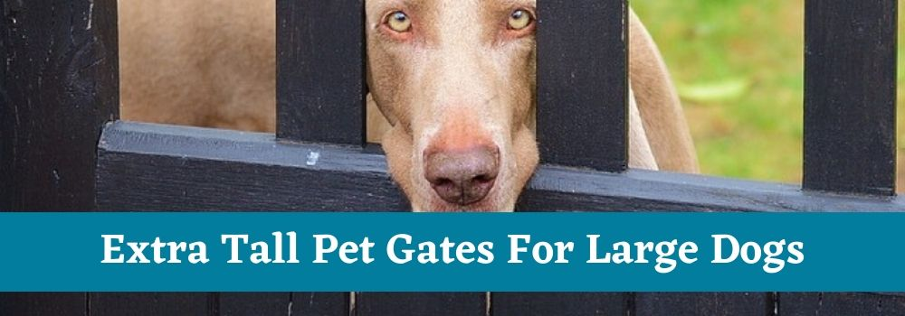 Extra Tall Pet Gates For Large Dogs