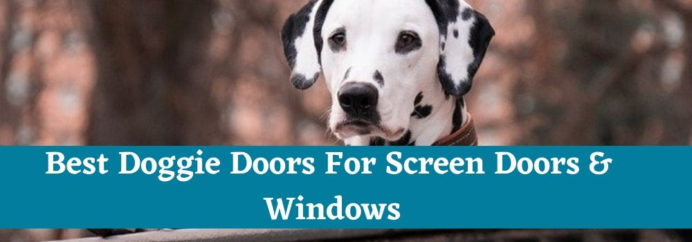 Best Doggie Doors For Screen Doors & Windows