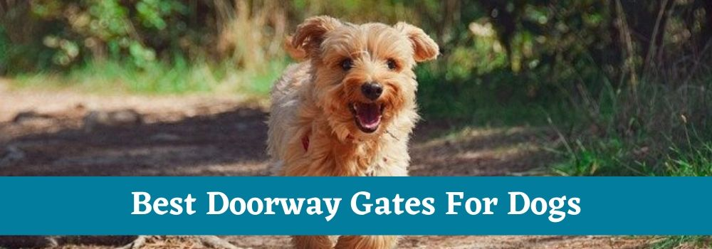 Best Doorway Gates For Dogs