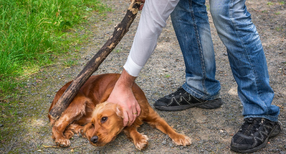 Dog Training with Fear and Punishment.