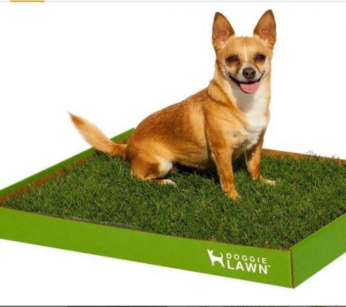 Doggielawn Disposable Litterbox